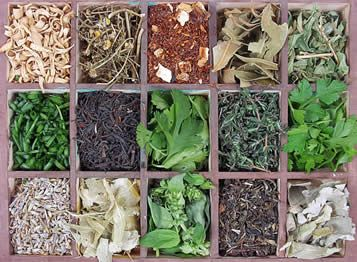 Growing , Harvesting and Storing Herbs