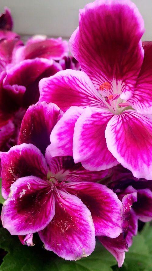 Imagem de beautiful, flowers, and flower