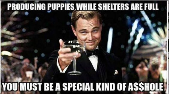 breeding puppies while shelters are full you must be a special kind of a$$hole:
