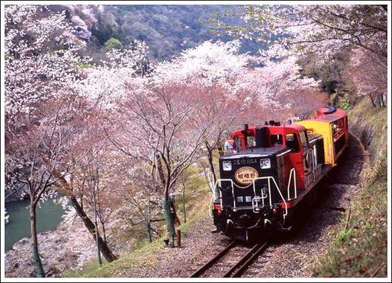 Sagano Trolley Railway, Kyoto トロッコ列車ギャラリー