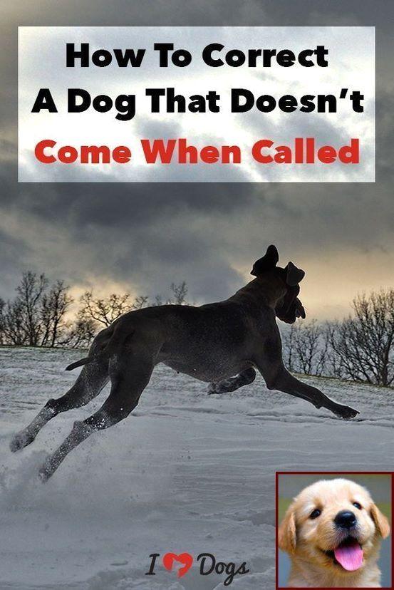 1 Have Dog Behavior Problems Learn About Dog Behavior Male Vs