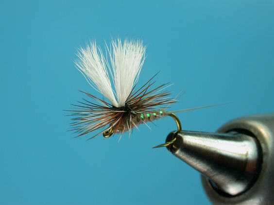 ParaWulff. I like parachute flies a lot when dry flying.