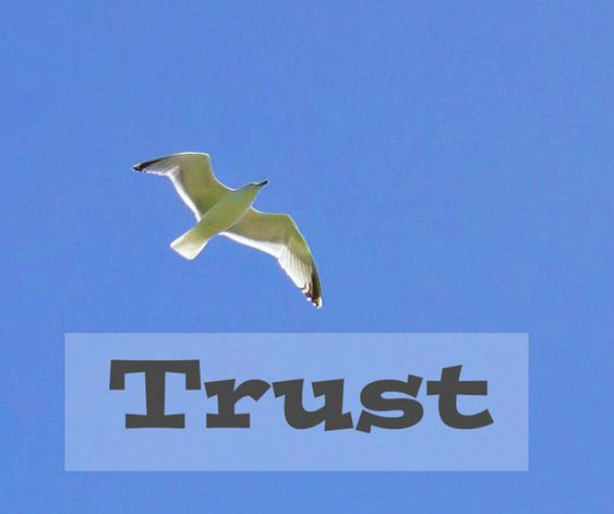trust to fly
