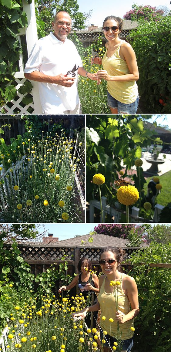 Ashley's father grew all of the billy buttons that she and Chad used for their wedding in his vegetable garden.