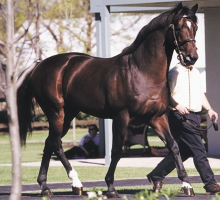 Fusaichi Pegasus-2000 Kentucky Derby winner