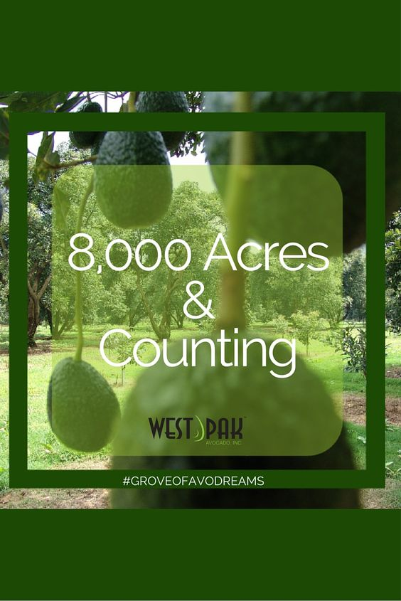Our #GroveofAvoDreams starts with West Pak's Grower Commitment