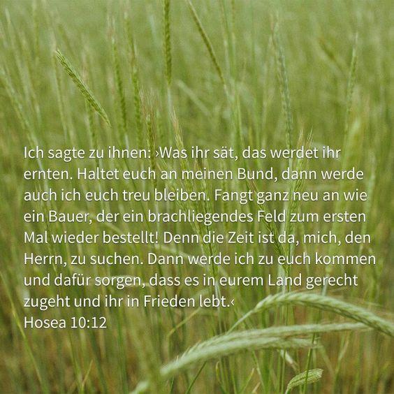 Saat & Ernte. Ursache & Wirkung.