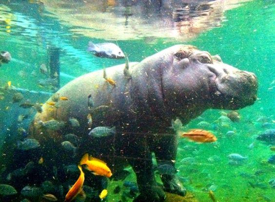 Happy Hippo Adventure Aquarium Camden Nj New Jersey