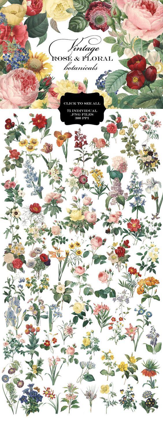 Vintage Rose & Floral Botanicals by Eclectic Anthology on Creative Market