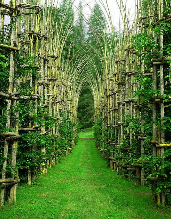 Cattedrale Vegetale (Tree Cathedral) by Giuliano Mauri