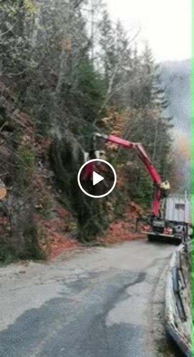 Técnica segura para cortar galhos