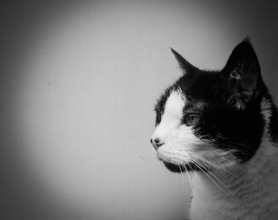 J.Fotografie meine Katze