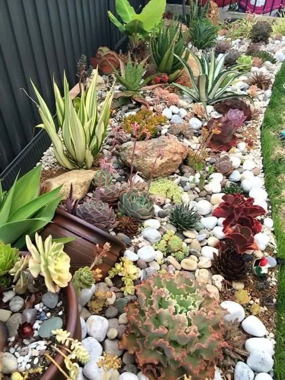 Sweet Succulent Border Of Rocks And Ruffled Echeveria Agaves Aeoniums Aloes And Succulent Garden Landscape Succulent Landscape Design Succulent Landscaping