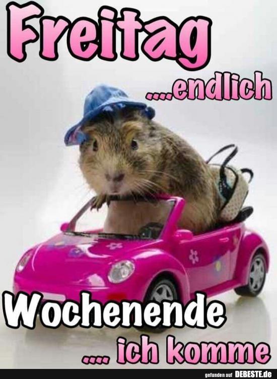 Freitag Endlich Lustige Bilder Spruche Witze Echt Lustig Lustige Bilder Lustige Humor Bilder Freitag Bilder Lustig