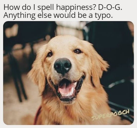 Pin By Superpooch On Dogs Dog Life Dog Pictures Dog Memes