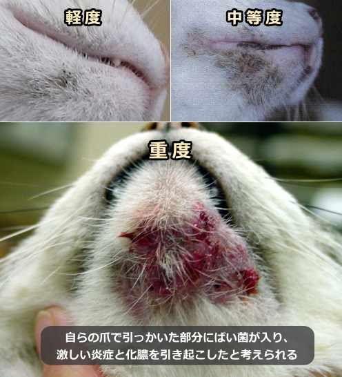 ニキビ 猫 顎