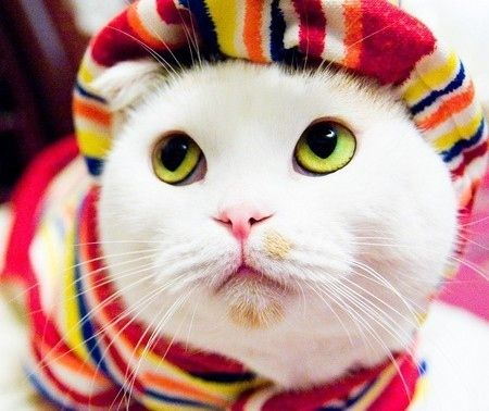 Kitty with fantastic eyes and a great dress sense!