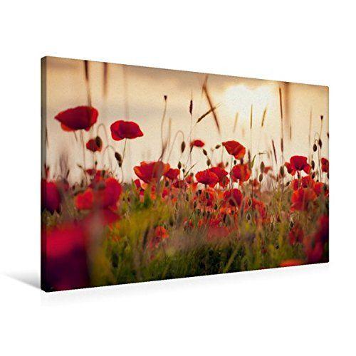 Calvendo Premium Textil Leinwand 90 Cm X 60 Cm Quer Mohnblumen Im Abendlicht Wandbild Bild Auf Keilrahmen Fertigbild Auf Echt Keilrahmen Leinwand Bilderwand