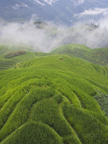 China, Guangxi Province, Longsheng, Landscape of Rice Terraces in the ...