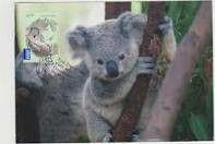 Cutest animal ever!