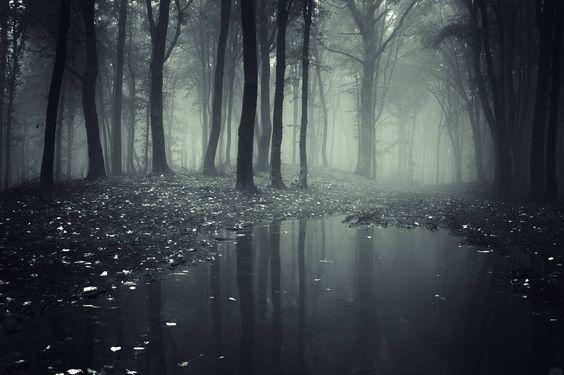 Sombre forêt sereine.