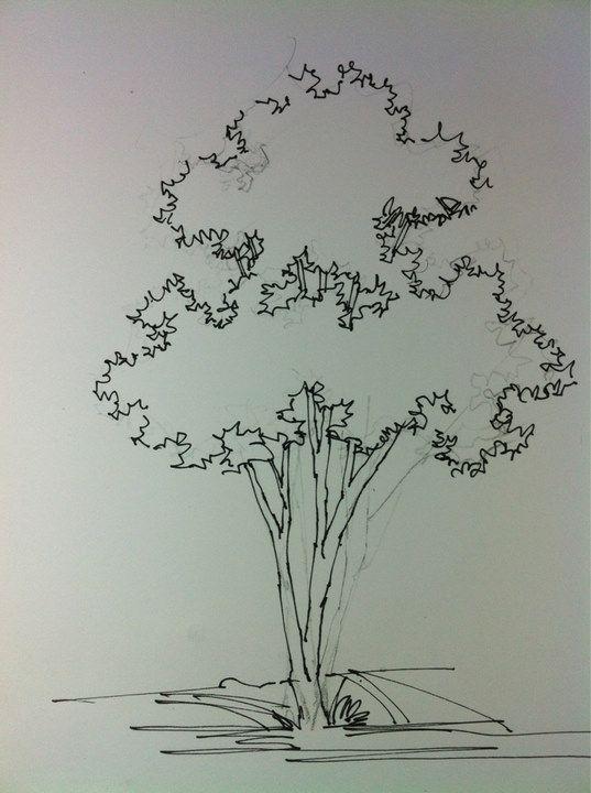 Tree Hand Rendering Drawing Landscape Pinterest Design