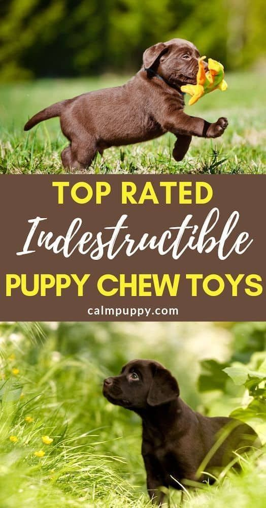 Best Chew Toys For Puppies Puppy Chewing Tough Dog Toys