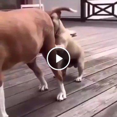 O cachorro examinado o seu amigo