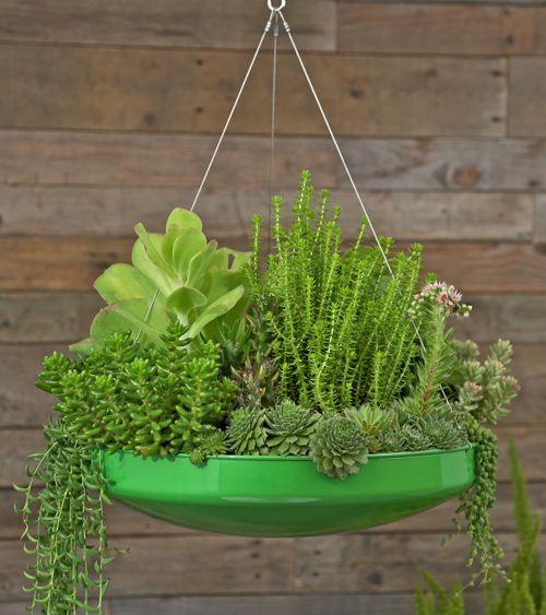 Hanging Basket | Plants | Pinterest | Hanging Baskets, Vancouver ...