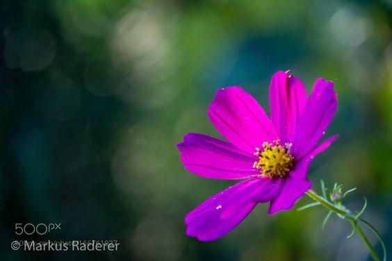 Blüte by ma4ra6. @go4fotos