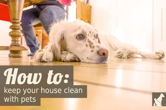 A Valuable Resource For Pet Owning Clean Freaks It Is