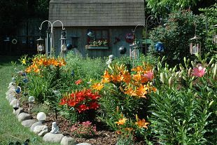 our back yard flower garden blooms from late March through October and gives my husband and myself such pleasure to watch Mother Nature show her beauty.