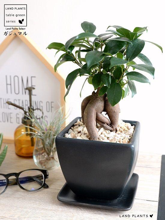 安定感抜群 高品質陶器鉢 黒色マット仕上げ スクエア鉢 2020 ガジュマル 陶器 鉢 植物