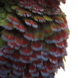 An In-Depth Look At Bird Feathers