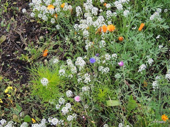"""I added """"Oktober-Blumenwiese"""" to an #inlinkz linkup!http://mumselsgartenparadis.blogspot.de/2013/10/wochenend-blumen-118.html"""