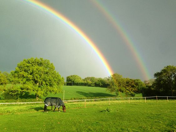 From Nicola, Andover| The Jacksons BIG Equestrian Picture Competition #horse #field #rainbow #equestrian #photography