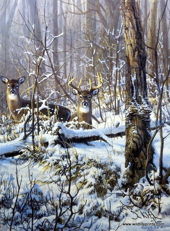 A pair of whitetail deer have settled into a dense forest for winter shelter in the Don Kloetzke print STOP, LOOK AND LISTEN. Eventually the doe will seek other shelter more conducive to the nutrition