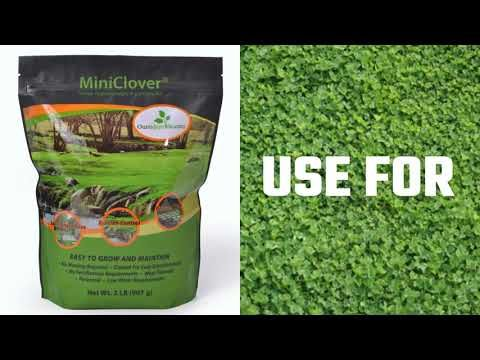 77937613ea29efda8277fad05e897d9d - How To Get Rid Of Clover Patches In Lawn