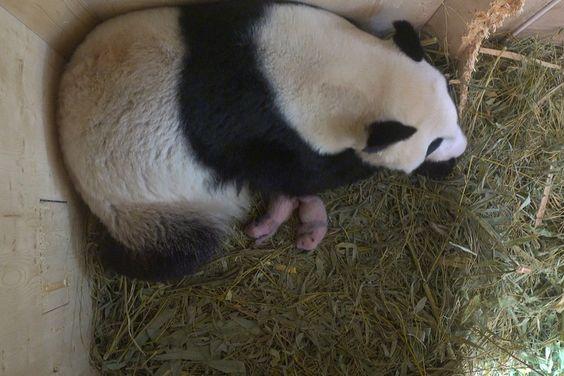 Tagebuch / Diary of the Panda Twins – Tiergarten Schönbrunn