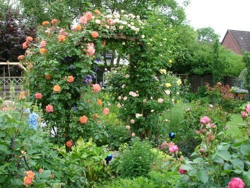 Wie krieg ich die Rose am Rosenbogen groß? - Seite 1 - Rund um die Rose - Mein schöner Garten online