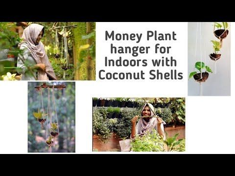 Coconut Shell Plant Hanger For Indoors Money Plant Hanger Indoor Plants Malayalam Botanical Woman Botanica In 2020 Shell Plant Hanger Plant Hanger Rope Plant Hanger