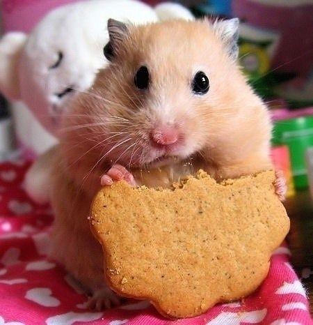 Cuddly animals' cute moments - Xinhua   English.news.cn