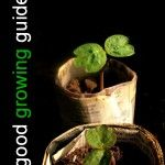 great link to a variety of growing guides