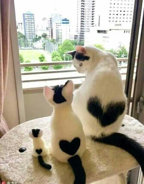 Pin By Cindybrown On Animais Animals Cute Cats Cute Cats And Kittens Cute Animals