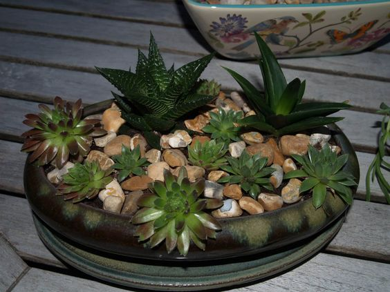 www.mcarthurlandscapes.co.uk Busy making little indoor succulent planters for clients :-)