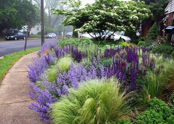Allium Globemaster Uber Katzenminze Garten Lavendel Blumengarten Katzenminze