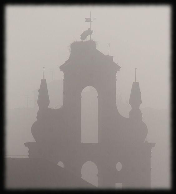 Cigüeñas en la niebla (Cazalla de la Sierra, Sevilla) - Despierta el día en Cazalla de la Sierra con las blandas de San Juan, las cigüeñas se acicalan antes de empezar la jornada y espera a que la niebla se disperse para sobrevolar las benditas tierras del Parque Natural Sierra Norte de Sevilla.