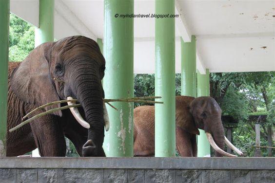 Elephants in Mysore Zoo
