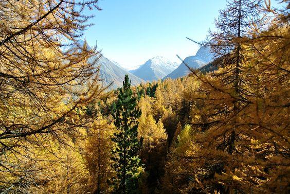 Die schönsten Herbstwanderungen der Schweiz. 17 einfache Wanderungen im Kanton…