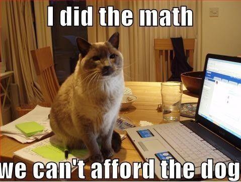 Lol freakin cats